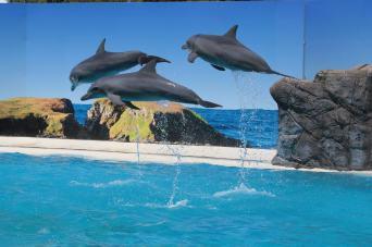 Dolphin Show At The Marine Park