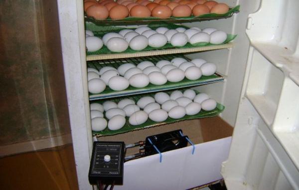 So ermitteln Sie die optimale Inkubatorgröße? (Mini, 100, 500, 1000 Eier)