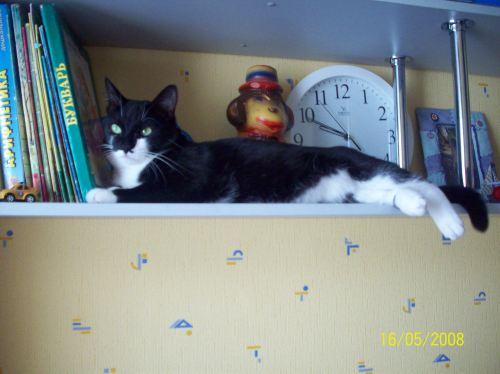 Коты (181)