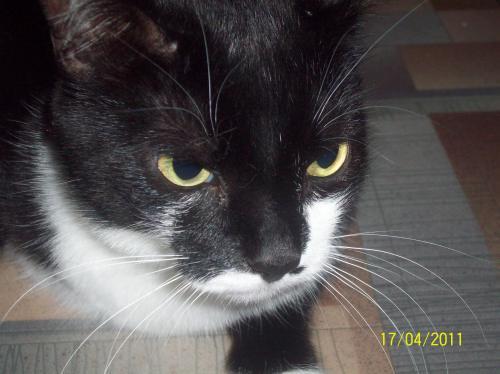 Наш кот Боня