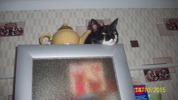 Кот наверху