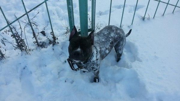 Ая в снегу
