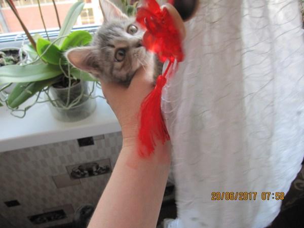 Поймала на шторе
