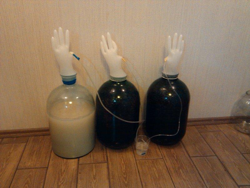 Вино из винограда в домашних условиях рецепты в банке с перчаткой фото