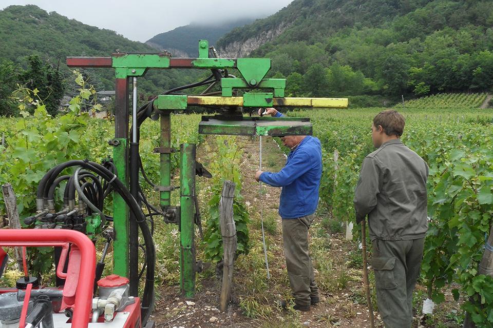 Rogneuse coupage des bouts de vignes
