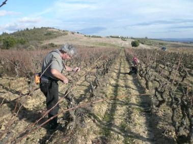 Photos - Taille des vignes du Viala