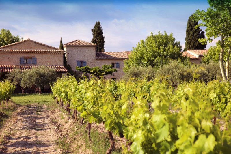 Un autre angle, vue depuis les vignes du Mas Caron