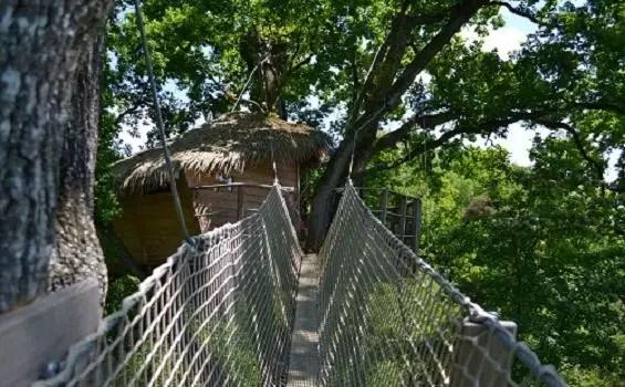 Cabane-dans-les-arbres-guadeloupe