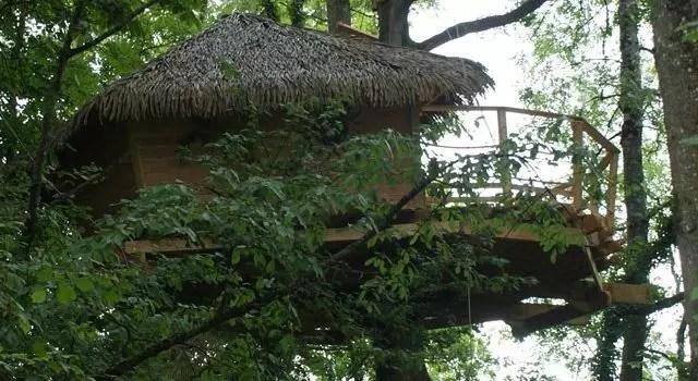 cabane-dans-les-arbres-shanghai-7m