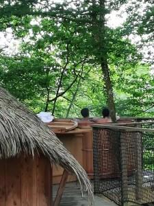 cabane dans les arbres avec spa au Domaine des Vaulx