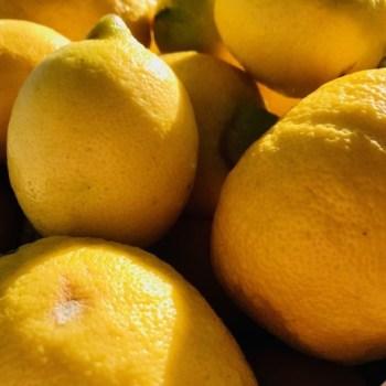 Citron Bio Italie