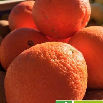 Orange Bio Navel Italie