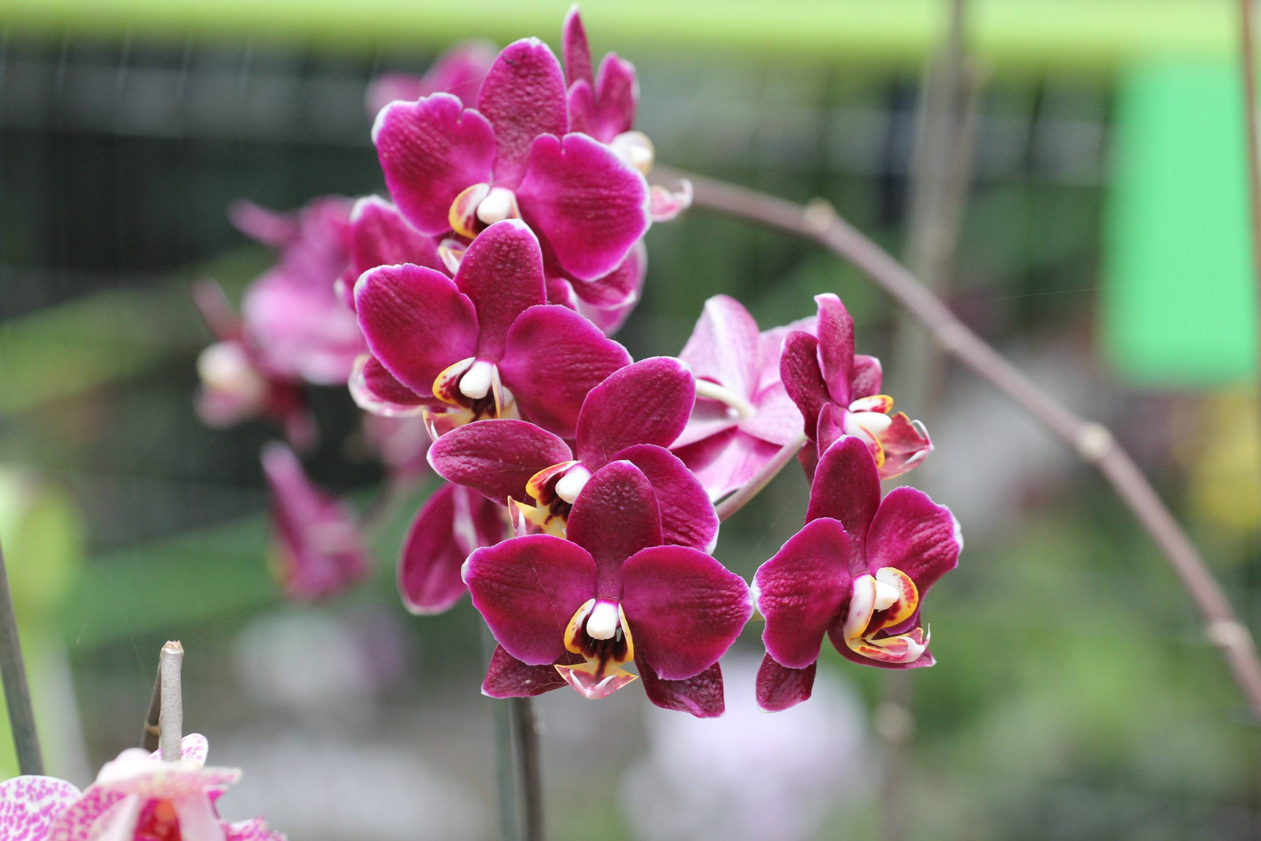 Orchid Society