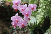 OrchidSociety.net, domain name for sale