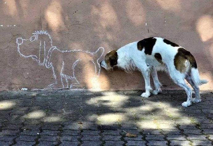 анальные железы у собак