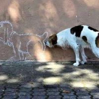 Анальные железы у собак: тот еще геморрой!