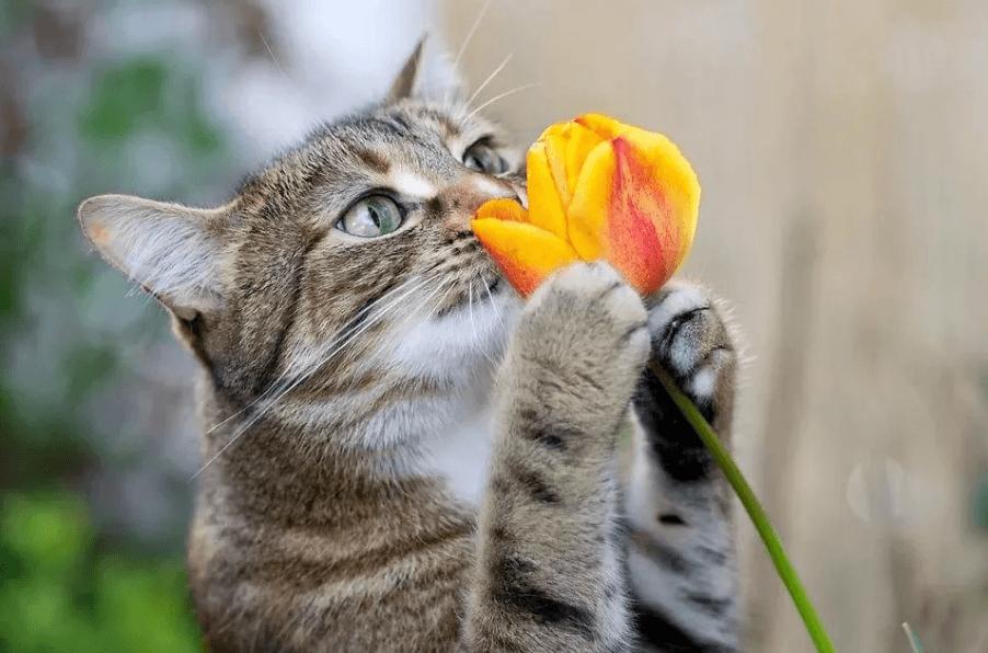 кот ест растения