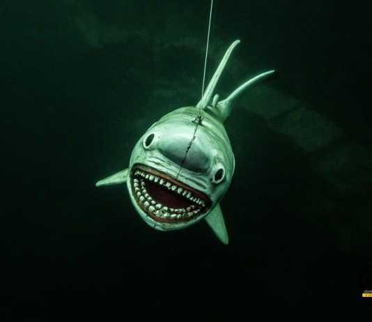 Kamieniołom Horka i rekin