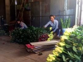 Preparing roses for transport
