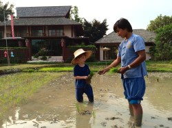 Rice planting lessons