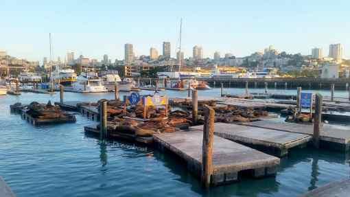 Sea Lions at Pier 39, San Francisco