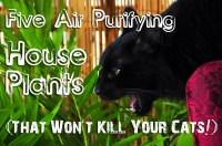 Pothos House Plants Toxic To Cats