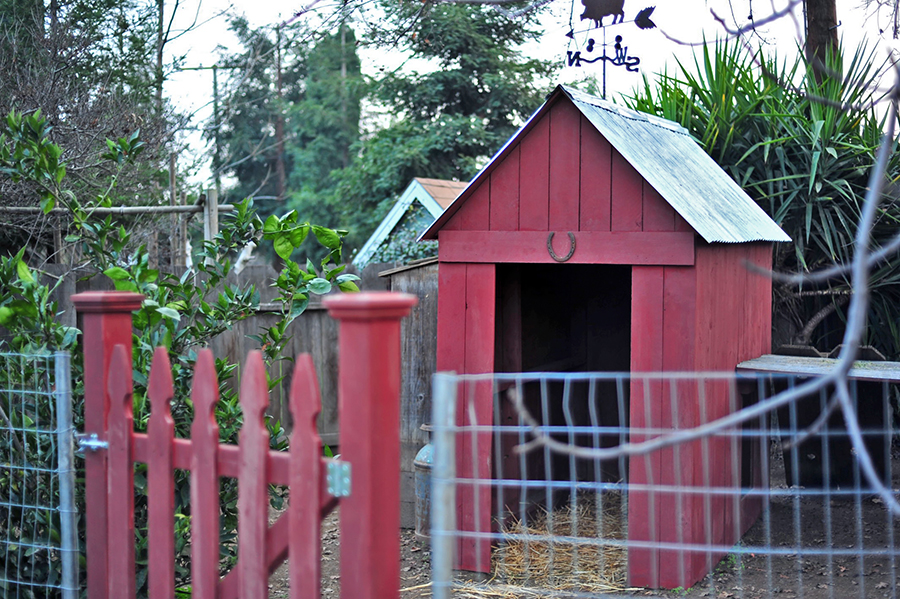 Building A Backyard Goat Fence For Our Nigerian Dwarfs