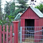 Building a Storage Barn or Shelter for Urban Backyard Goats