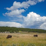 The Great American Safari – Sightseeing Yellowstone