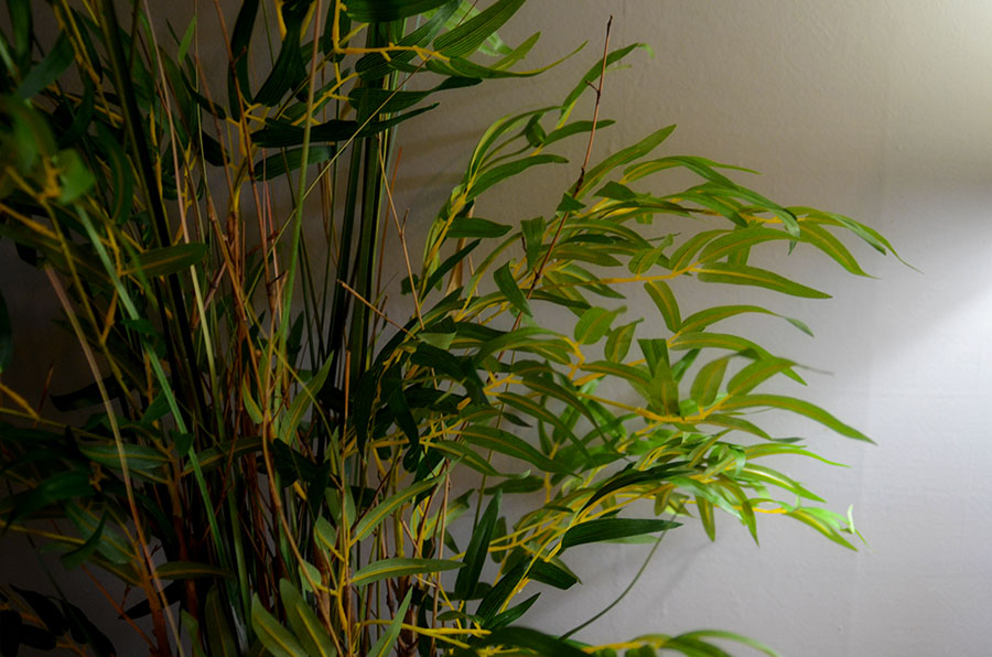 Are Fake Plants Good Feng Shui?
