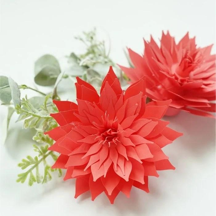 Anemone dahlia