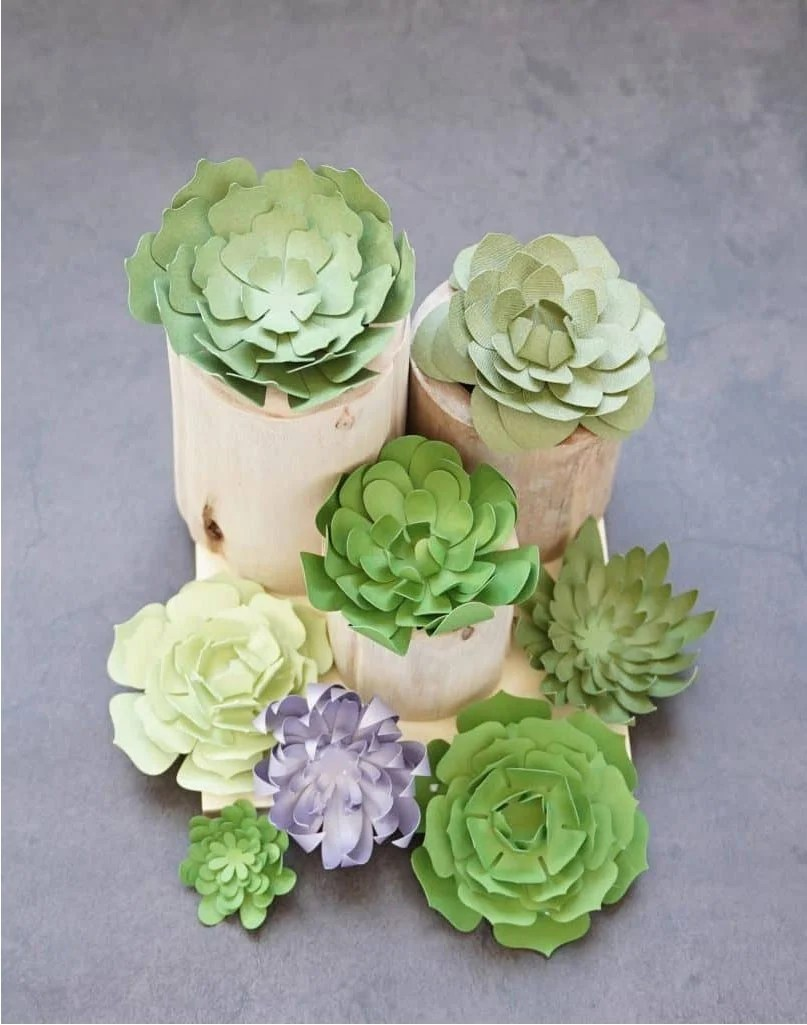 free succulent svg