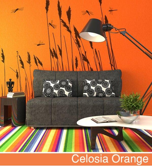 fototapeta-big-trix-celosia_orange