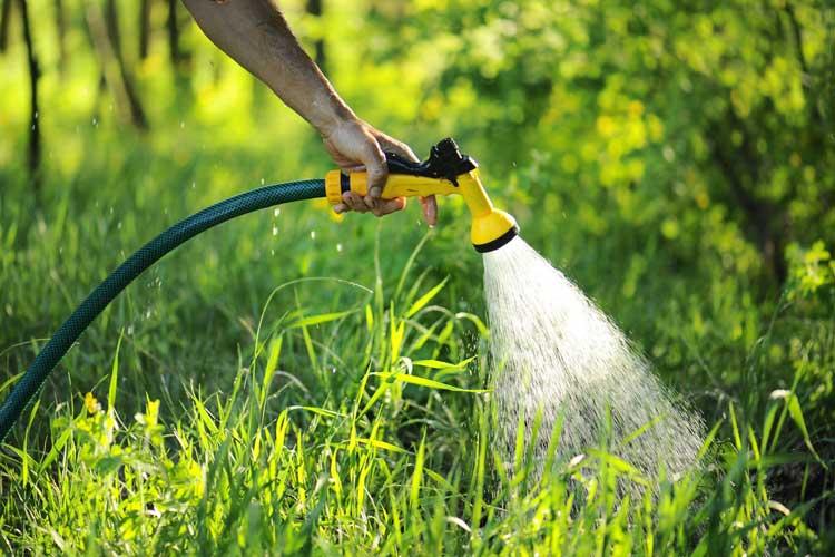 podlewanie trawy wężem ogrodowym
