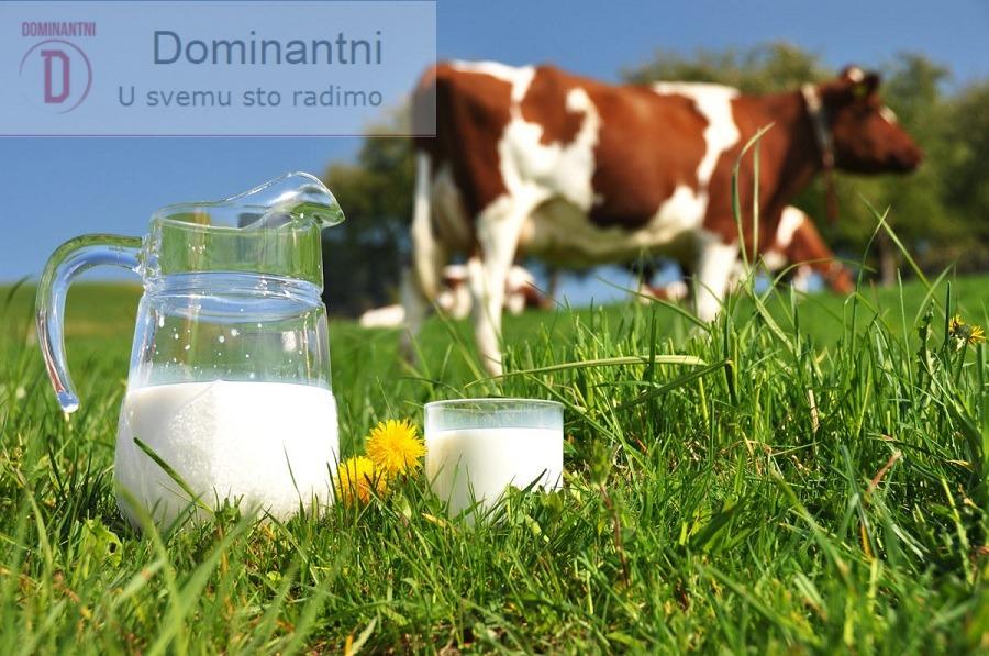 Kravlje mlijeko, lijek ili otrov? Istina će Vas zaprepastiti