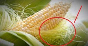 Ovo su čudesne zdravstvene prednosti kukuruzne svile za koje većina ne zna, a morali bi!