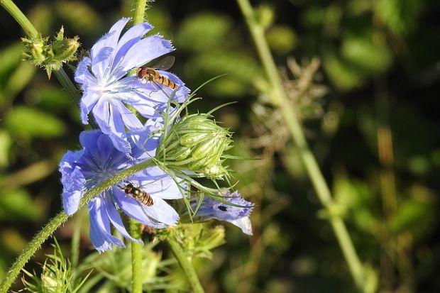 Korijen može da izliječi rak, a cvijet srce i dijabetes: Zašto ovu biljku stalno bacamo?!