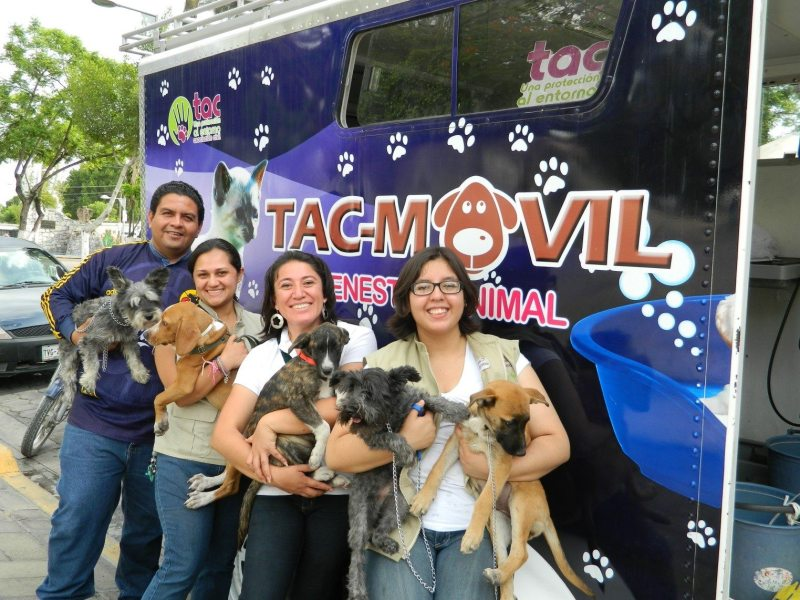 tag-animales