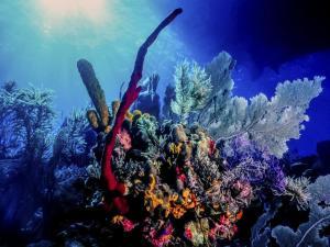 ecosistemas-arrecifes_0
