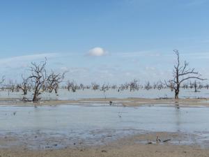 ecosistemas-pantanoscosteros