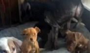 DENUNCIAN A 'ANIMALISTA'; MALTRATA A LOS PERROS QUE RESCATA EN CDMX