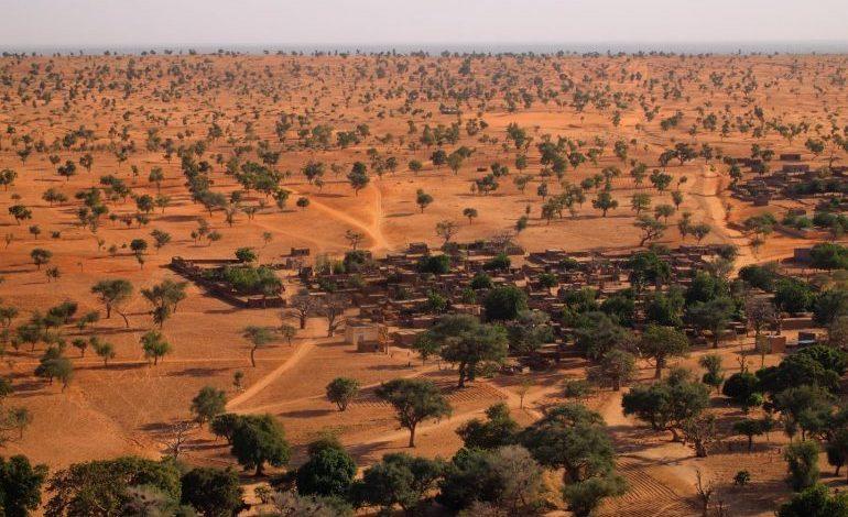 ¡INCREIBLE! 1,800 MILLONES DE ÁRBOLES EN EL DESIERTO DEL SAHARA SON DESCUBIERTOS