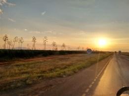 Sisal plantation near Morogoro