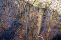 L'eau dans le boisé me met la tête à l'envers