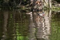 De l'autre coté de la rivière, un couple de branchus glissent dans les reflets