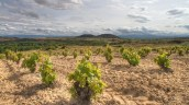 Vignoble Moraza, San Vicente de la Sonsierra
