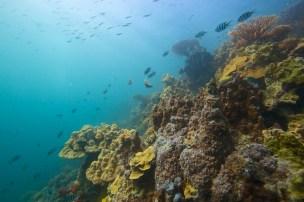 Récif corallien, Golfe de Tadjoura, Djibouti.