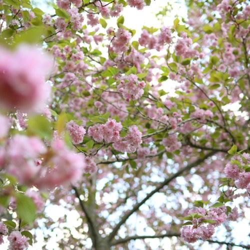 Summer Florals 001