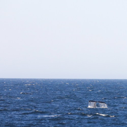 Whale Watch 002
