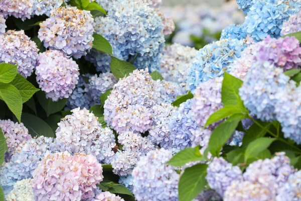 Summer Florals 002